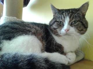 Těsný kočička dostat olízl